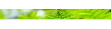 Santé et spiritualité